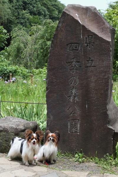 四季の森公園 ブログサイズ0020