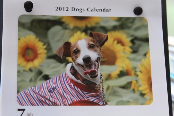 犬ねくり ブログサイズ0019