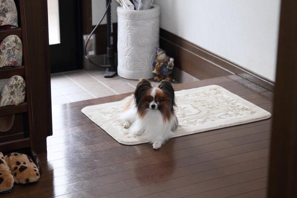 家にて ブログサイズ0015