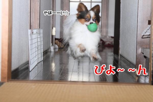 家の中の飛行犬 ブログ0004