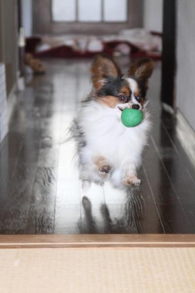 家の中の飛行犬 ブログ0010