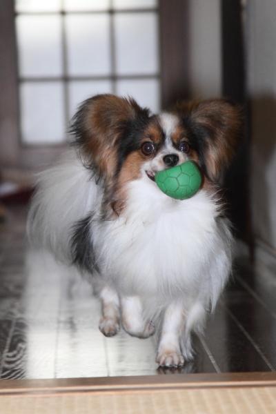 家の中の飛行犬 ブログ0012