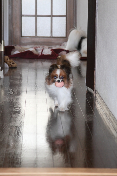 家の中の飛行犬 ブログ0009
