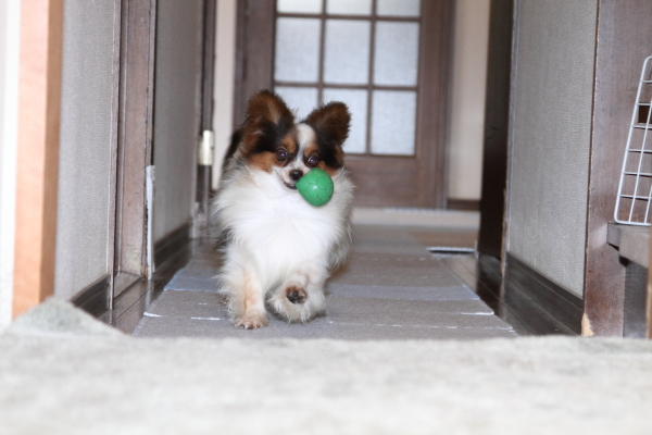 家の中でボール遊び ブログ08030030