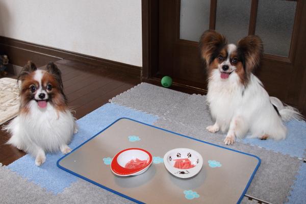 家の中でボール遊び ブログ08030061
