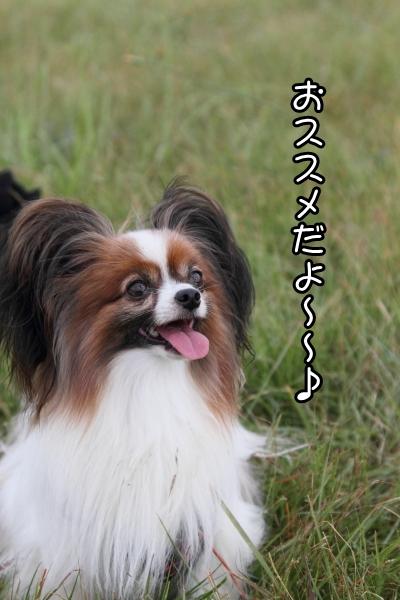 2012年 米子 ブログ0058