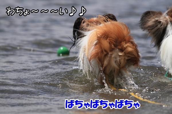 2012_08_22 西湖 ブログサイズ0015
