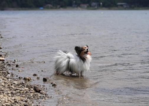 2012_08_22 西湖 ブログサイズ0005