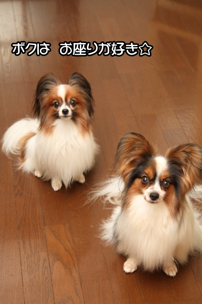 2010_09_01 ブログ0014