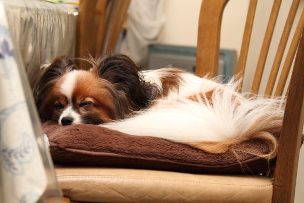 扇風機と犬 ブログ0006