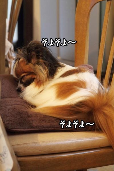 扇風機と犬 ブログ0005