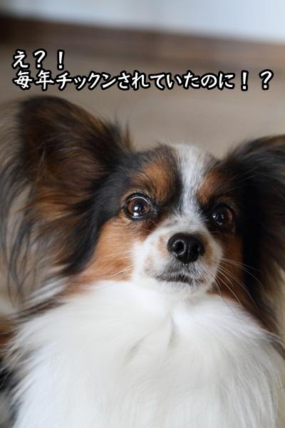 2011_12_27 ヒルサイドガーデンDPP_0054