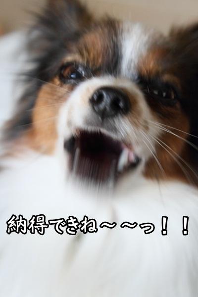 2011_12_27 ヒルサイドガーデンDPP_0060