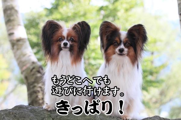 2012_08_22 西湖 ブログサイズ0104