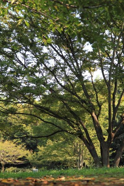 ふるさと公園 水遊び ブログサ0017