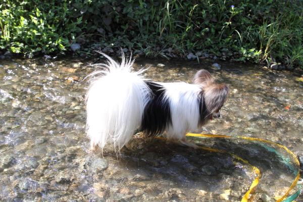 ふるさと公園 水遊び ブログサ0037