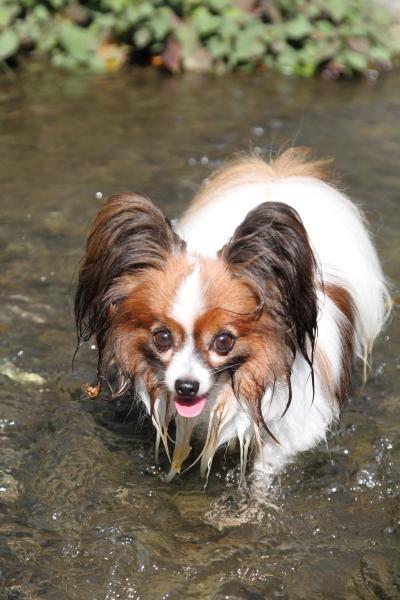 ふるさと公園 水遊び ブログサ0041