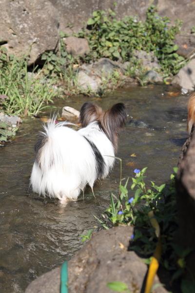 ふるさと公園 水遊び ブログサ0039