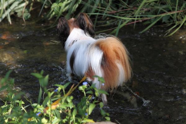 ふるさと公園 水遊び ブログサ0043