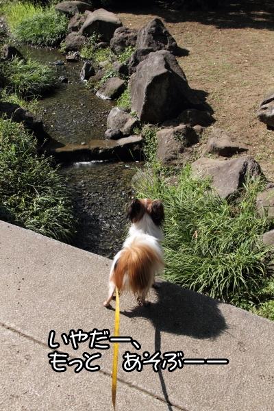 ふるさと公園 水遊び ブログサ0048