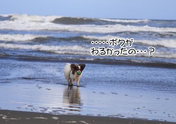2012_09_18 海 ブログ2012_09_18 海遊び 九十九里0114