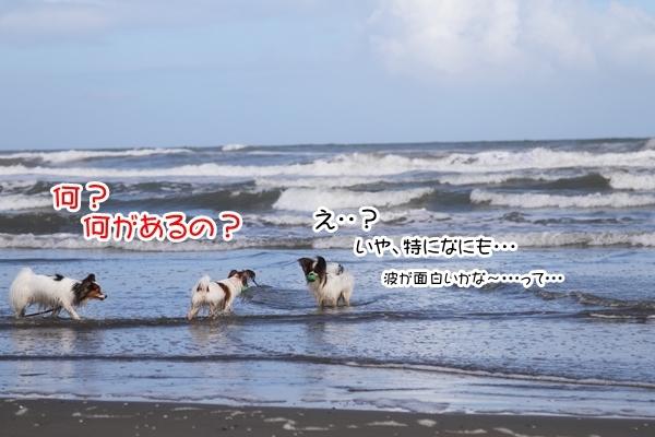 2012_09_18 海 ブログ2012_09_18 海遊び 九十九里0111