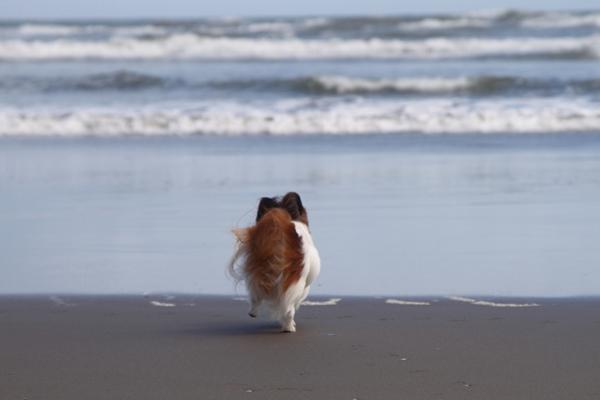 2012_09_18 海 ブログ2012_09_18 海遊び 九十九里0011