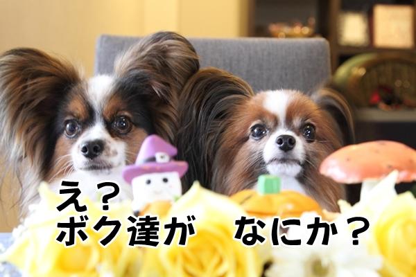 2012_09_25 インターメディエイトIMG_9218