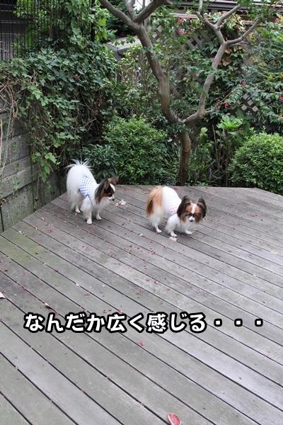 2012_09_30 台風の前IMG_9246