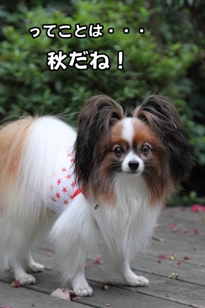 2012_09_30 台風の前IMG_9250