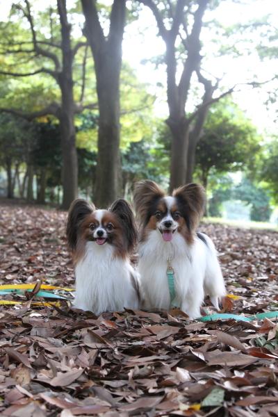 2012_10_02 根岸森林公園 ブログ0038