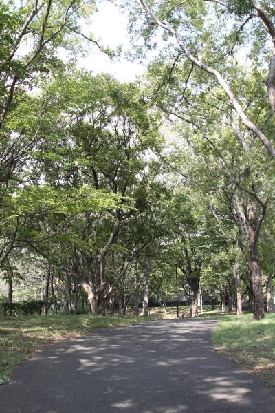 2012_10_02 根岸森林公園 ブログ0001