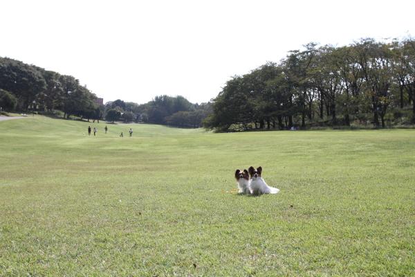 2012_10_02 根岸森林公園 ブログ0011