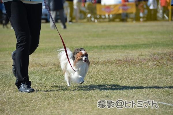 2012_11_04 秋季訓練競技会 ヒトミさん75_DSC_9677