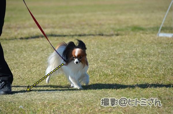 2012_11_04 秋季訓練競技会 ヒトミさん73_DSC_9679