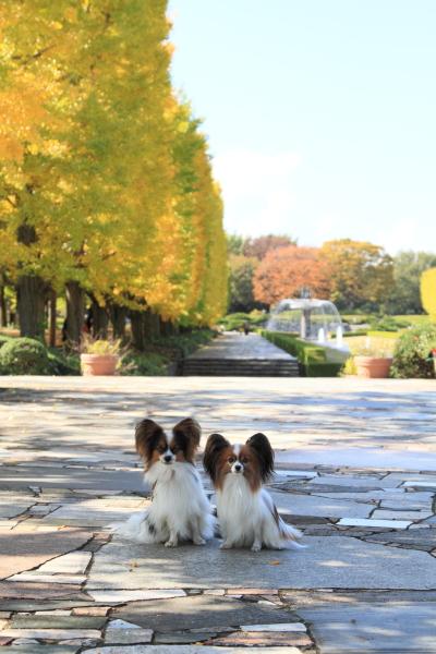 2012_11_07 コスモス ブログサイ0005