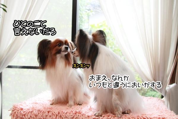 2012_11_11 シャンプー後 ブログ0005