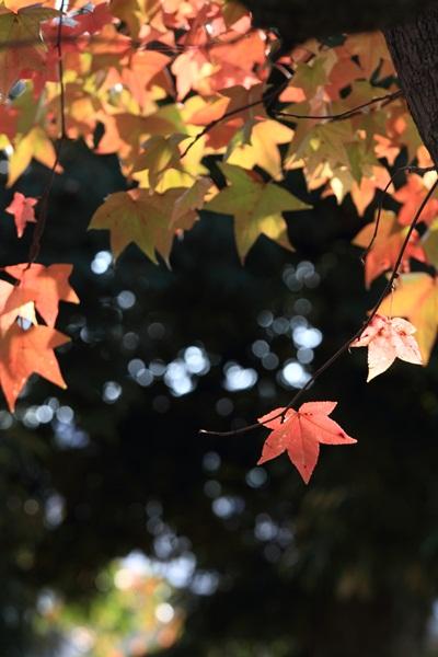2011_11_02  公園DPP_0014