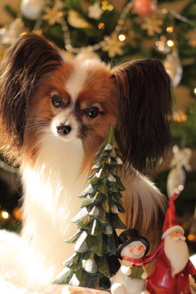 2012_11_20 クリスマスツリーjp0013