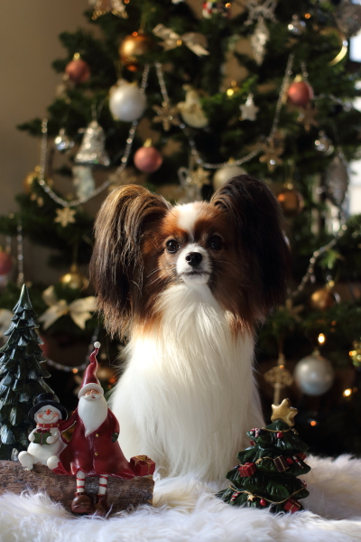2012_11_20 クリスマスツリーjp0008
