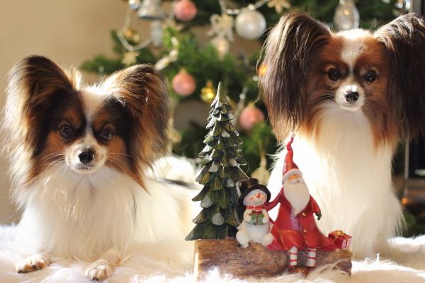 2012_11_20 クリスマスツリーjp0021