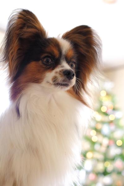 2012_11_20 クリスマスツリーjp0061