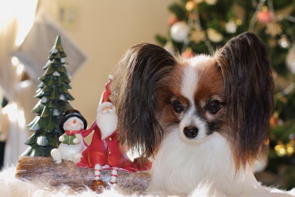 2012_11_20 クリスマスツリーjp0052