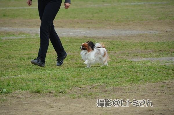 春季競技会 ヒトミさんDSC_4217