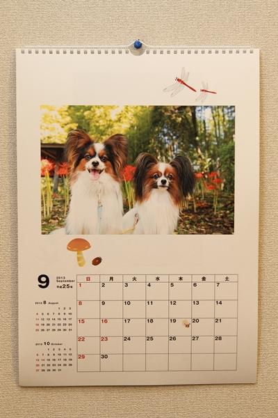 ワルっこカレンダー 20130009