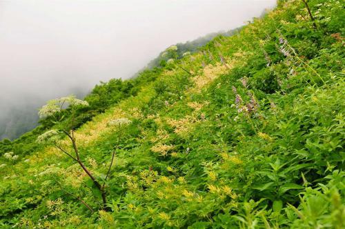 20120717sankoho2139.jpg