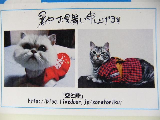 2011_0810201108100001.jpg