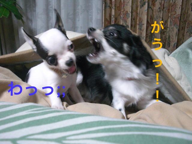 moblog_008382cf.jpg