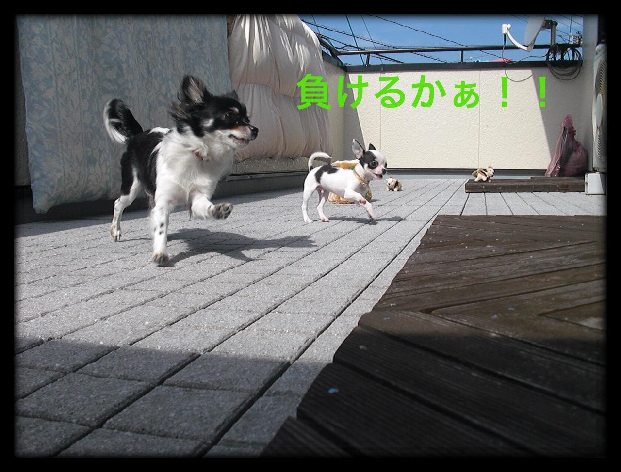 moblog_0d8ca884.jpg