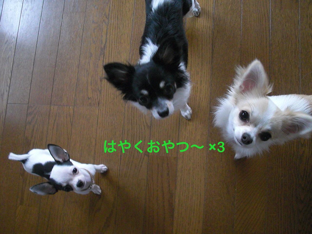 moblog_51b0a708.jpg